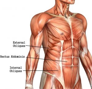 abdominals1-300x292